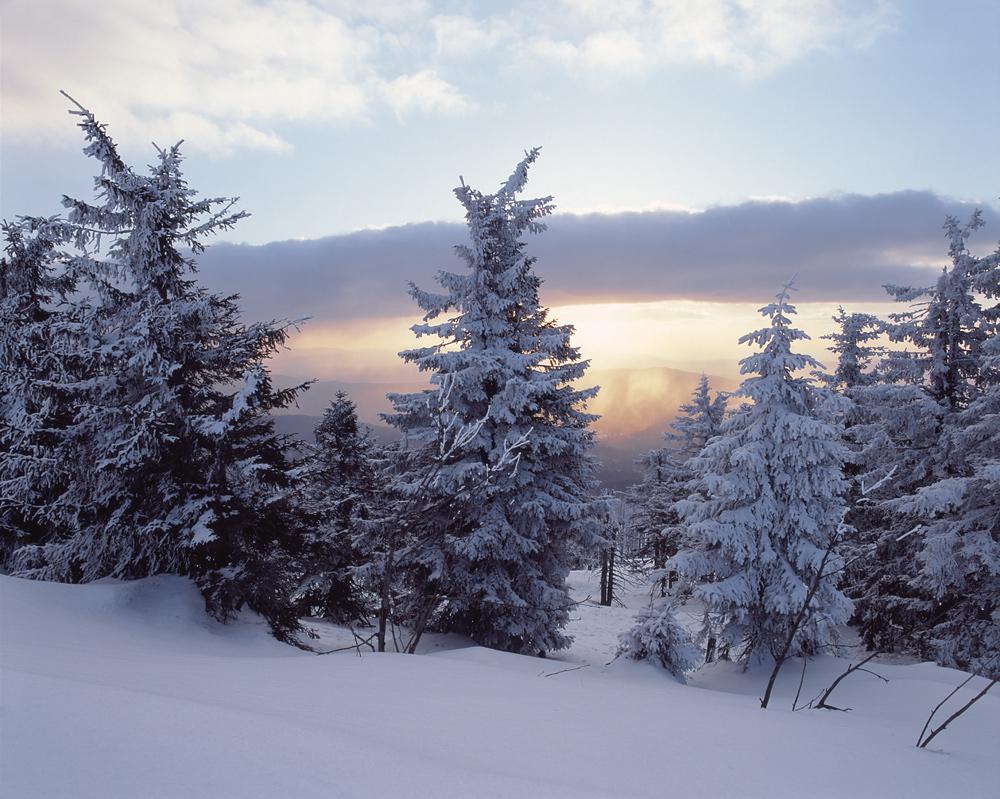 Winter im bayerischen wald foto bild landschaft berge for Goldfischteich im winter