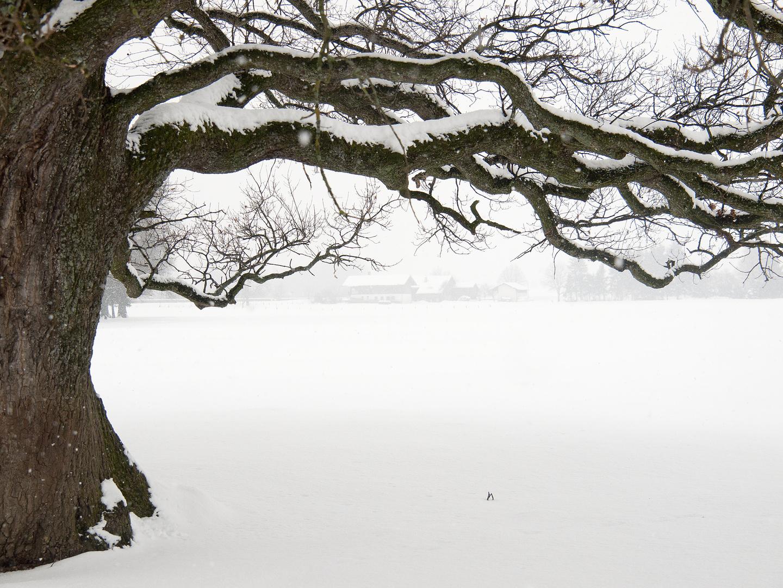 Winter im Chiemgau 5