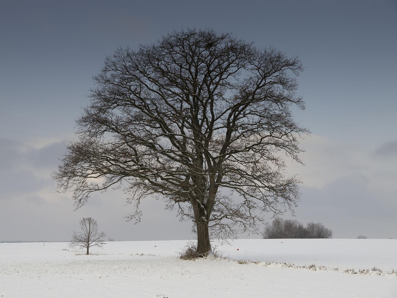Winter im Chiemgau 9