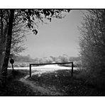 Winter im Diepholzer Moor