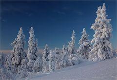 Winter im Fjell