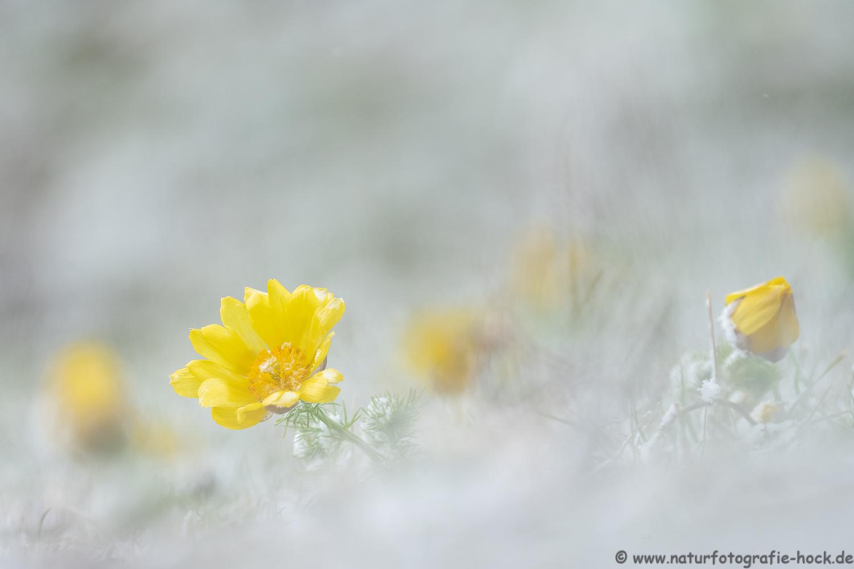 ~ Winter im Frühling