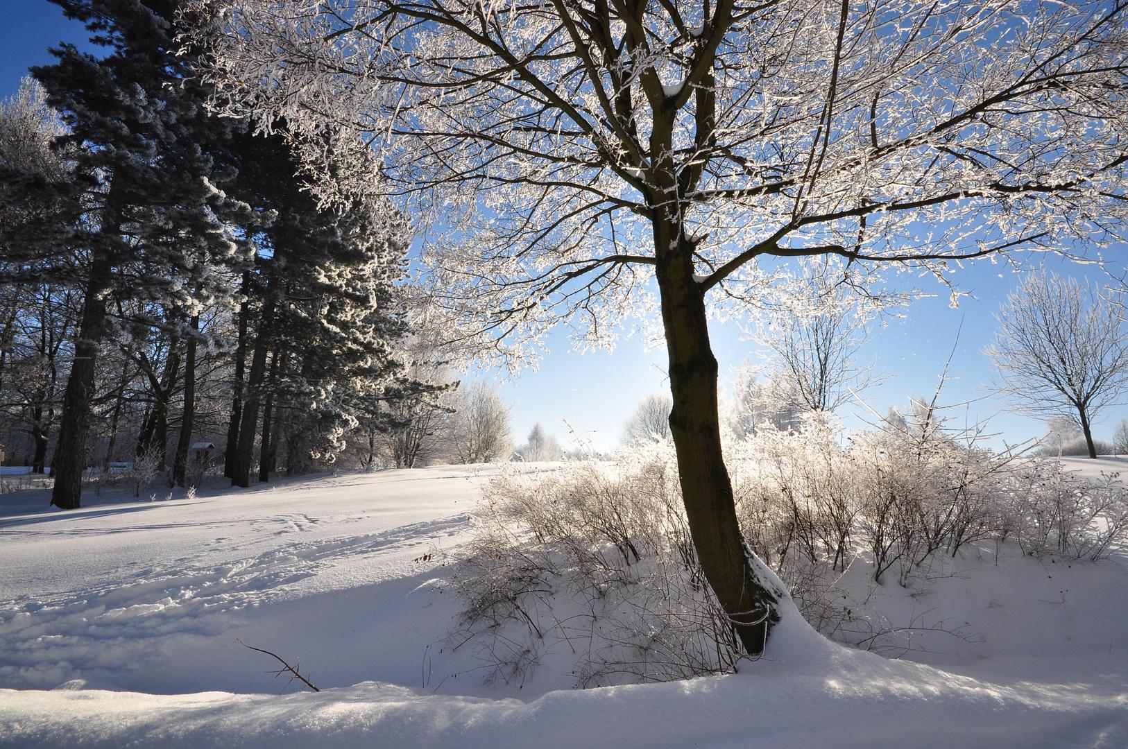 Winter im Gegenlicht....