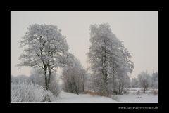 Winter im Hammoor