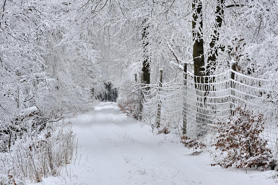 *Winter im Hochwald*