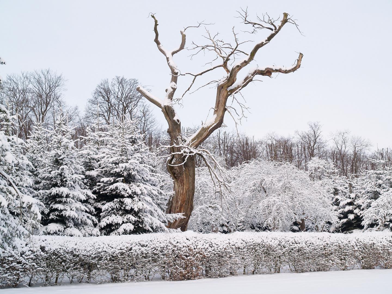 Winter im Jersbeker Barockgarten