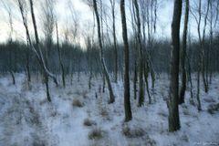 Winter im Kaltenhofer Moor 1