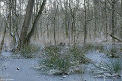 Winter im Kaltenhofer Moor 2