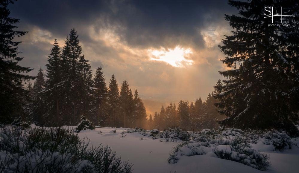 winter im licht foto bild landschaft wald urlaub bilder auf fotocommunity. Black Bedroom Furniture Sets. Home Design Ideas