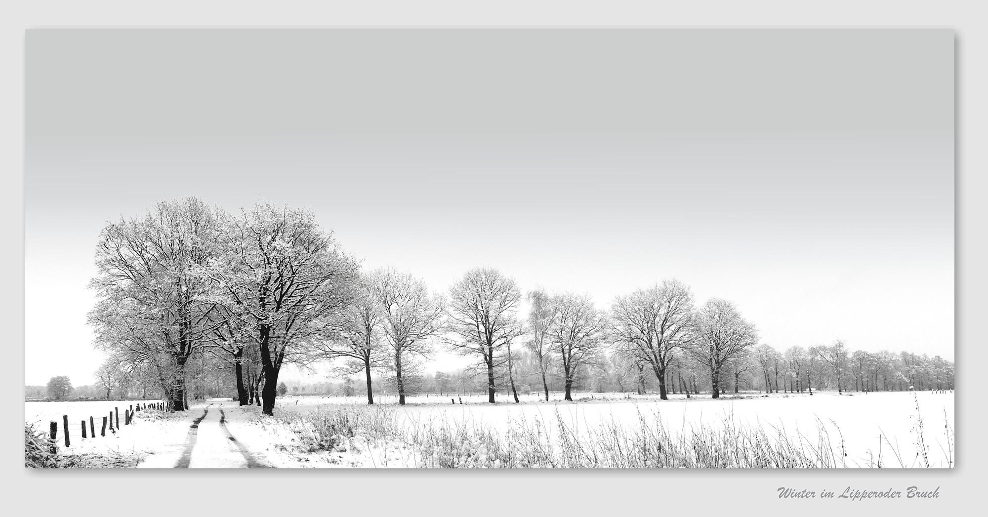 Winter im Lipperoder Bruch