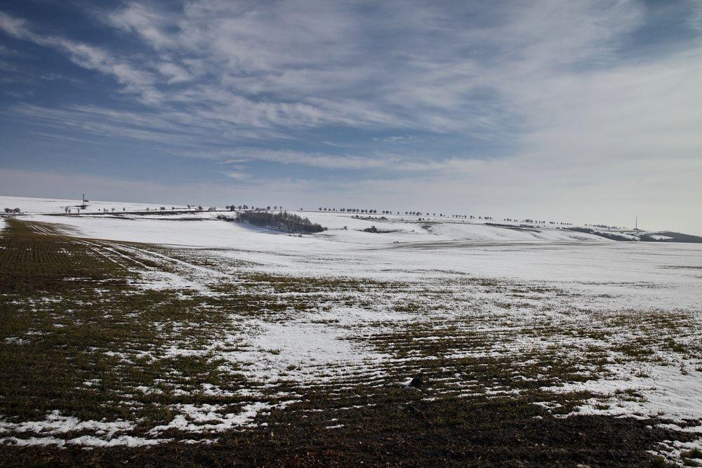 Single mansfelder land