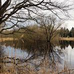 Winter im Moor zum Spiegeltag...
