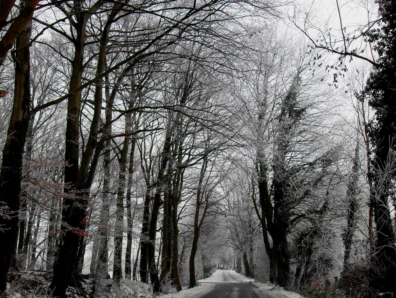 Winter im Münsterland 1