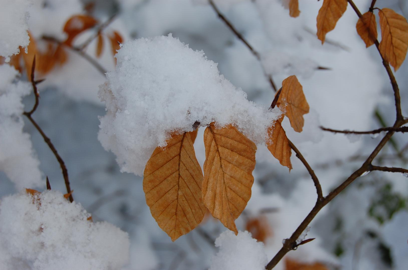 Winter im Oberbergischen