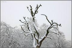 Winter im Park 11A