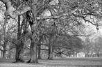 Winter im Rosensteinpark