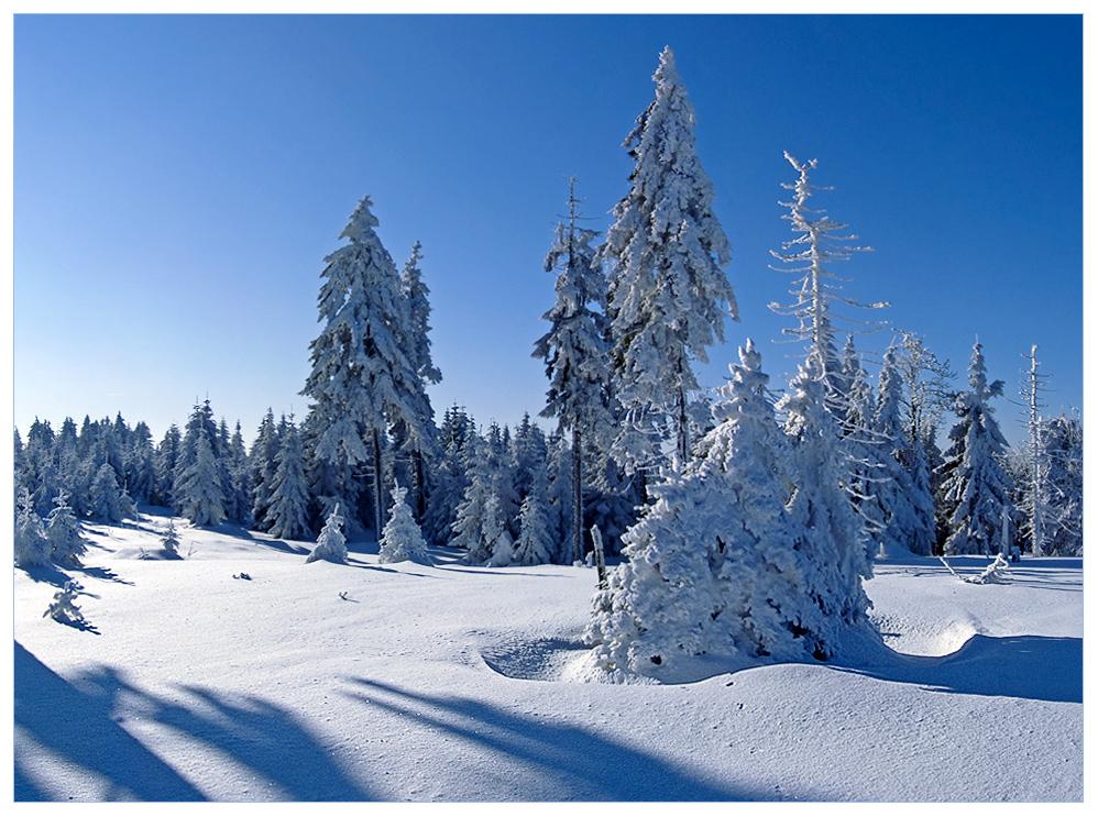 Winter im Schneekopfmoor