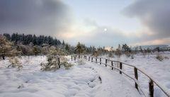 Winter im  schwarzen Moor