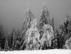 Winter im schwarzen Wald