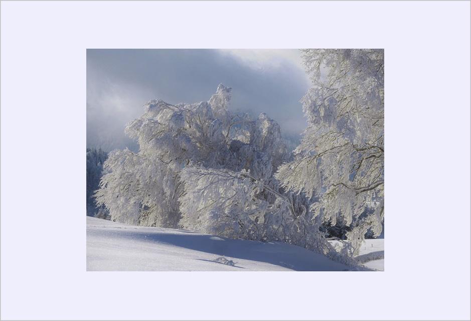 Winter im Schwarzwald 1