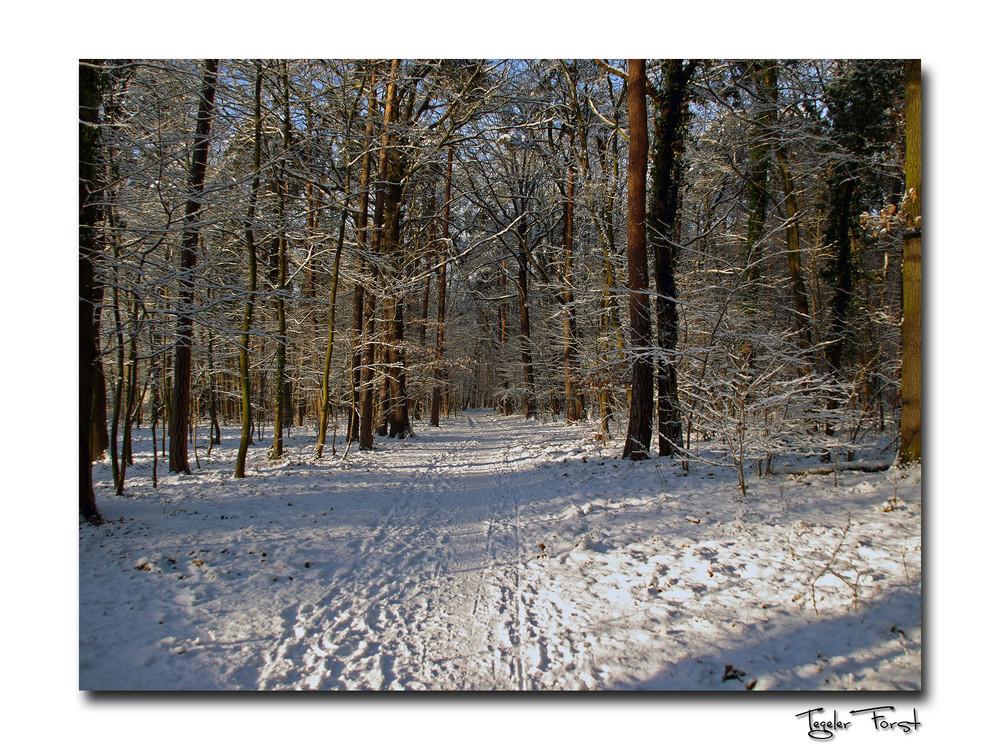 Winter im Tegeler Forst