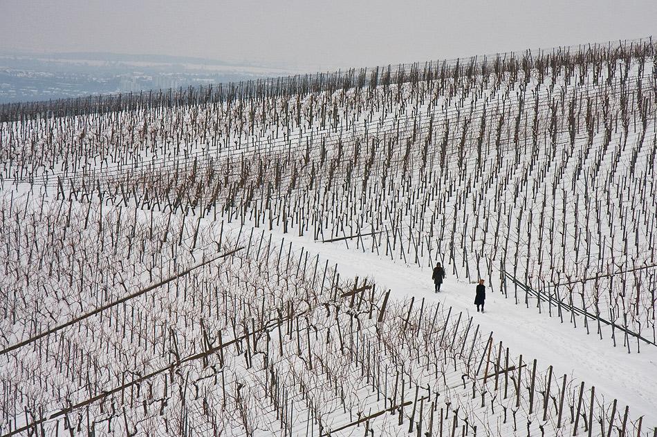 Winter im Weinberg - voran gehen
