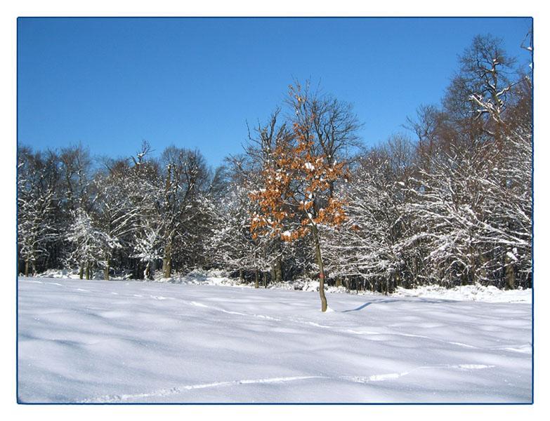 Winter im Wienerwald (2)