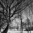 Winter im Wiesengrund