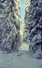 Winter im Wildschappach
