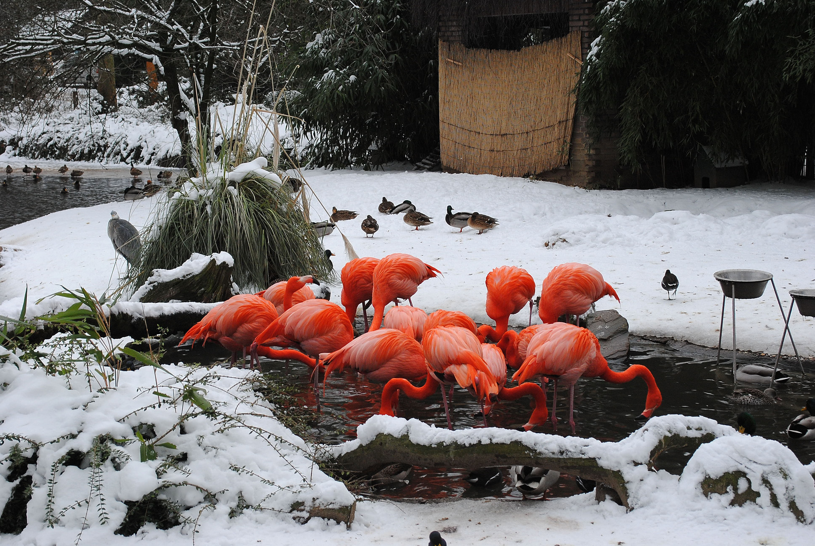 Winter im Zoo duisburg
