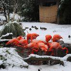 Winter im Zoo duisburg
