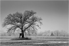 Winter - Impression