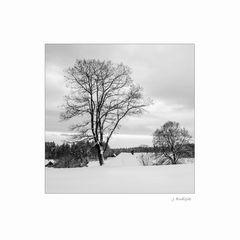Winter-Impression in Schwarz-WEiß