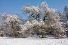 Winter Impression Nr.