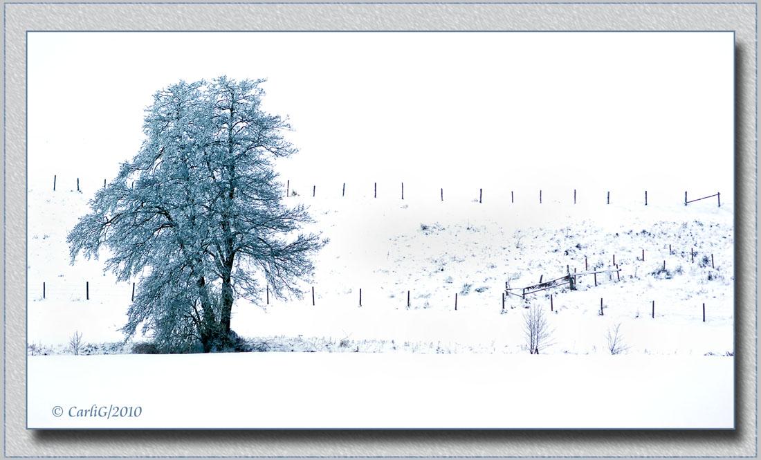 Winter Impressionen 2010#02