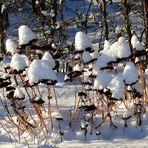 Winter-Impressionen II