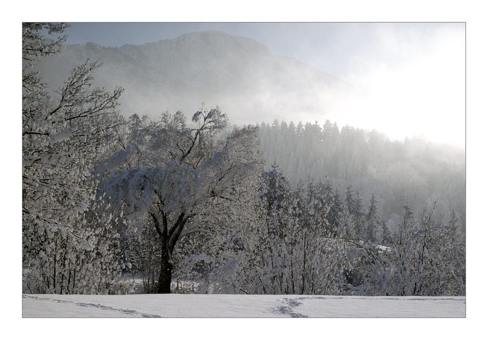 Winter Impressions - Winterimpressionen I