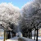Winter in a park in Plock / Poland /