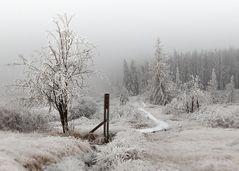 Winter in Baraque Michel