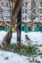 Winter in Basel 06