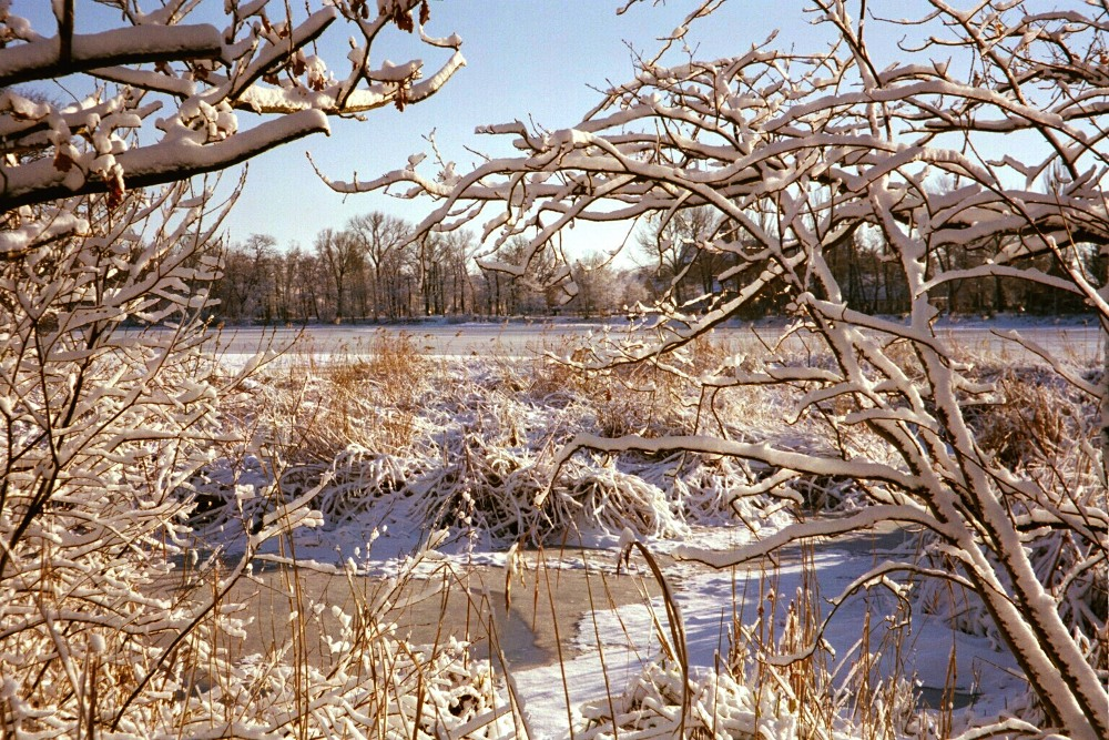 Winter in Braunschweig (1)