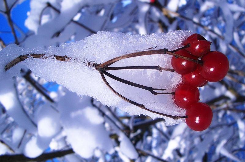 Winter in den Guldenen