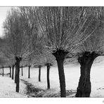 ~ Winter in den Weiden ~