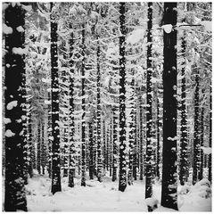 Winter in der Rhön # 0013