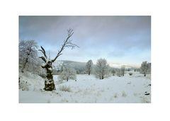 Winter in der Rhön (2)