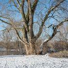 Winter in der Ricklinger Masch VIII - Hannover