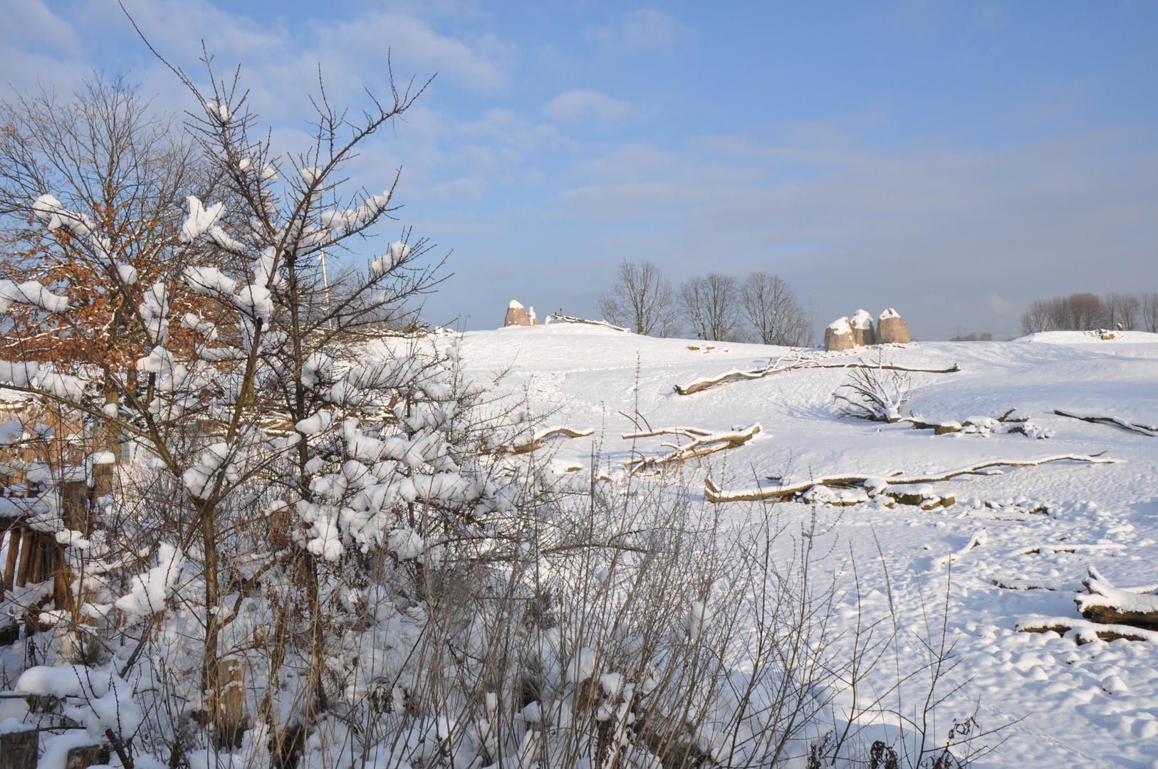Winter in der Savanne