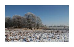 Winter in der Schneckengrüner Heide - 2