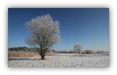 Winter in der Schneckengrüner Heide - 5