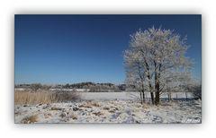 Winter in der Schneckengrüner Heide